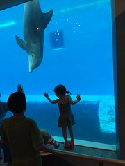 "Paul and Inde See Dolphins at Brookfield Zoo • <a style=""font-size:0.8em;"" href=""http://www.flickr.com/photos/109120354@N07/19990539282/"" target=""_blank"">View on Flickr</a>"