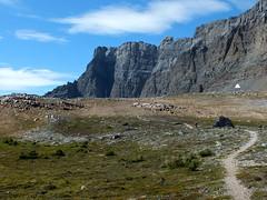Bow Peak summit scramble - Larry nears Crowfoot Pass (benlarhome) Tags: canada trekking trek nationalpark hiking hike glacier alberta banff marmot lakelouise scramble laufen scrambling icefieldsparkway bowlake highway93 bowpeak