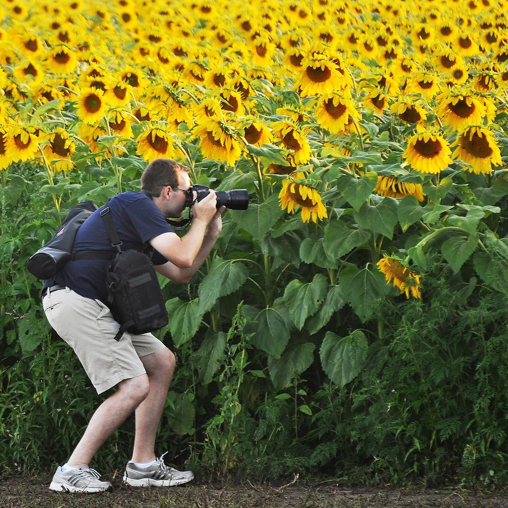 Stalking Elusive Trophy Sunflower >> The World S Best Photos Of Flowers And Middleton Flickr Hive Mind