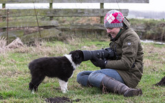 Taking Puppy Pictures Is Easy (Bas Bloemsaat) Tags: bordercollie camera sheepdog funny working