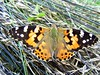Butterfly 1131 (+450000 views!) Tags: butterfly borboleta farfalla mariposa papillon schmetterling فراشة