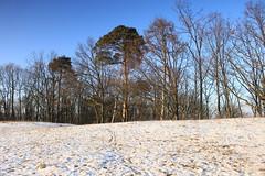 IMG_3138 (wozischra) Tags: berlin heiligensee spaziergang baumberge höchster baum altheiligensee