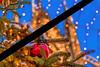 Christmas market, we like him. We stay together. (Renate Bomm) Tags: togehter renatebomm christmasmarket weihnachtsmarkt weihnachten festderliebe berlin lights bokeh köln cologne religionen krieg tod sterben mitleid liebe frieden glauben furchtbar schrecklich christmaslights navidad holiday ngc flickrunitedaward tannenbaum weihnachtsbaum weihnachtskugel red rot 2016onephotoeachday