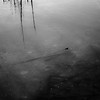Pond Surface Layers 010 (noahbw) Tags: d5000 nikon prairiewolfsloughforestpreserve abstract blackwhite blackandwhite bw cold freezing frozen ice marshland minimal minimalism monochrome natural noahbw pond quiet reflection square still stillness water wetlands winter