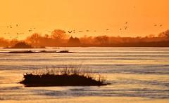 Platte river (orientalizing) Tags: animals birds gibbon greatplains gruscanadensis landscape nebraska platteriver platterivervalley sandhillcrane sunset usa