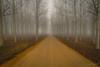 The way (AvideCai) Tags: avidecai sigma1020 paisaje niebla bosque arboles