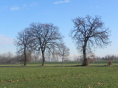 DSCN7615 (Gianluigi Roda / Photographer) Tags: lateautumn earlywinter december 2011 countryside trees landscapes