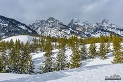 Rolling Teton Hills (kevin-palmer) Tags: grandtetonnationalpark nationalpark snowshoeing wyoming winter snow snowy cold nikond750 grandteton clouds tamron2470mmf28 white tetonmountains trees sunshine