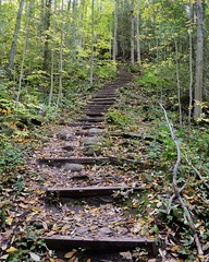 Steep climb - Bruce Trail, towards Devil's Pulpit - Forks of the Credit, Caledon, Ontario (edk7) Tags: nikond300 edk7 2008 canada ontario peelregion caledon forksofthecredit niagaraescarpmentunescoworldbiospherereserve brucetrail landscape trail step ascent forest tree rock nature