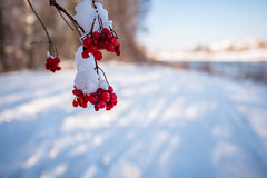 """"""" In the depth of winter I finally learned that there was in me an invincible summer."""" Albert Camus (elzauer) Tags: laufen bayern germany de winter snow leicaq leica"""