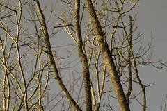 20170104-_IMG1013-Edit (fleetingphotons) Tags: pentaxk1 smcpentaxa200mmf28ed wasingestate fishing warrenbeat kennet trees