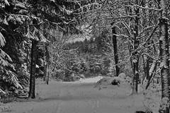 Winter (heiko.moser (+ 11.300.000 views )) Tags: winter noiretblanc nb natur nero nature natura outdoor monochrom mono landschaft wald woods forest schnee snow entdecken einfarbig eyecatch discover schwarzweiss sw schwarzweis schweiz bern bw blackwihte blancoynegro canon heikomoser