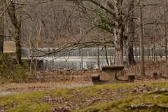 Hematite Lake Spillway_4621 (Porch Dog) Tags: 2017 garywhittington kentucky nikond750 fx nikon200500mm lbl landbetweenthelakes betweentherivers nature spillway hematitelake