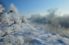 my winter (Beata Jakubas) Tags: beatajakubas beata jakubas nikon poland landscape view snow winter silesia