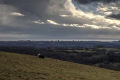 Cardiff Cityscape