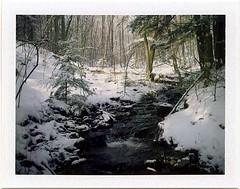 (babireley) Tags: polaroid250 fujifilmfp100c pawilds pottercounty pa pottercountypa dodgerun stategamelands64 winter snow trees