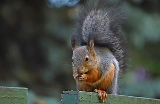 Am I a bird??? (Flickr autotags) No, I'm squirrel!