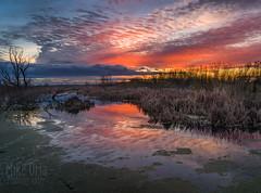 Big Red Swamp (Explore #54) (mikeSF_) Tags: california delta twichell sherman brannn bradford bacon island mackenson antioch riovista sacramentoriver mikeoria pentax 645 645z dfa35 35mm sunrise
