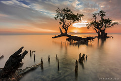 -Reach Out- (Jose Rey S. Pernia) Tags: benro nikon sun sunrise water seascapes lanscapes beauty seashore mangrooves filters firecrest lee singhray photix fine arts