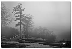 JANUARY 2017-020300-22 (Nick and Karen Munroe) Tags: fog foggy misty mist weather heartlakeconservationarea heartlake heartlakeconservation nikon nickandkarenmunroe nickmunroe nikond750 nickandkaren karenick23 karenick karenandnickmunroe karenmunroe karenandnick munroedesignsphotography munroedesigns munroephotography munroe beauty brampton ontario outdoors canada beautiful blackandwhite blackwhite bw bandw monochrome greyhaze shadows trees nikon2470f28