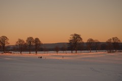 sunday evening recreation (michaelmueller410) Tags: snow schnee harz winter wiese meadow trees dusk sunset dundown orange light persons sports walking crosscountry skiing walk afternoon late sunny