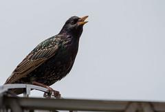 For the birds (IrishRedBeard) Tags: street usa bird animal northamerica 2015