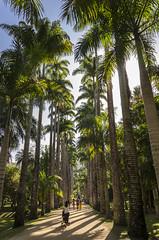 Jardim Botnico RJ (nardonogueira) Tags: nature riodejaneiro nikon rj errejota
