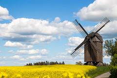 Windmill (Infomastern) Tags: sky cloud windmill field landscape countryside skne himmel raps canola landskap moln rapefield jordberga mlla flt vderkvarn jordbergamlla