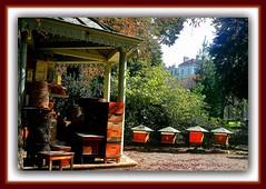 Ceinture Verte de Paris, Parc Jardin Floral Botanique Remarquable, Roseraie, Parc Floral de Paris, Parc de Bagatelle, Jardin des Plantes de Paris, Parisian Green Belt, Floral Rose Botanical Remarkable Garden Parck Promenade Randonne Walk Hike Trails (tamycoladelyves) Tags: flowers paris cute nature fleurs garden amazing nice fantastic pretty expo natural walk priceless gorgeous awesome trails jardin super hike delicious promenade stunning excellent greenbelt jolie extraordinaire sortie lovely charming fabulous luxembourg incredible graceful botanicalgarden parc unforgettable ballad extraordinary magnificent magnifique ballade pleasant beautifull delightful unbelievable joli balade jardinbotanique randonne parisienne jardindesplantes flowersgarden parcfloral bagatelle wonderfull superbe parck oustanding fabuleux ravissant roseraie excellente splendide surprenant jardinfloral tonnant ravissante fabuleuse jardinremarquable ceintureverte surprenante tonnante flowersparck