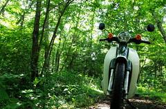 IMGQ2887 (okaki21) Tags: green bike honda cub pentax motorcycle k5 supercub ホンダ 1685 カブ スーパーカブ supercub110 hdda1685mmf3556eddcwr da1685 スーパーカブ110
