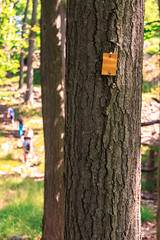Yellow trail marker (mtk788) Tags: newyork yellow us unitedstates hiking trail marker tomkinscove
