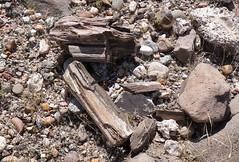 IMGP1825.jpg (DrPKHouse) Tags: arizona unitedstates loco bullheadcity bullhead petwood