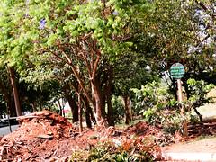 Os bandidos da sociedade (Centim) Tags: cidade brasil nikon foto br fotografia placa estado amricadosul mensagem pas sudeste recado d90 entulho continentesulamericano