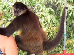 P8171122_LR (CharlieBro) Tags: 2016 centroamerica lagonicaragua lucy nicaragua agosto animal animale august barca boat lago lake lancha monkey natura nature scimmia summer wild
