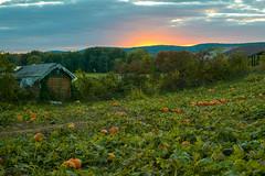 Pumpkin Patch Sunset (CrackerBrush) Tags: pumpkin patch sunset hdr farm vernon nj fall autumn halloween picking cabin mountains new jersey