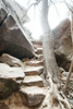 Steps to the Upper Emerald Pools (Curtis Gregory Perry) Tags: zion national park emerald pools upper tree dead nikon d800e rocks boulder roots stair steps