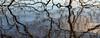 Winter reflections (Keith Gooderham) Tags: kg170104796aweb1 copyrightgreenshootsphotography lochlomond winter trees branches reflections dark somber
