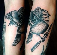 Chincol con cuchillo yanagi (Bastian Klak) Tags: chincol bird ave pajaro nature wild blackwork dots tattoo tatuaje chingolo chile santiago yanagi knife klak bastianklak dotswork