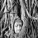 The Tree Buddha Head (Dave_Davies) Tags: thailand buddha head statue tree mono watmahathat ayutthaya