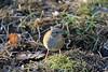 J78A0210 (M0JRA) Tags: rspb oldmoor birds lakes woods walks trees ponds fields grass hedges foot paths