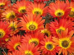 A splash of colour (Karen Pincott) Tags: s orange newzealand napier