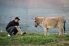 Mujo fotograferar Åsna 2013-04-13 (Michael Erhardsson) Tags: trebinje mujo friend vän resa 2013 bosnien april åsna djur natur