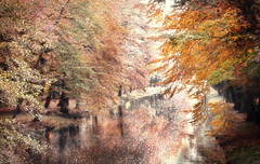 feel the magic of nature (Weirena) Tags: nature rivers landscapes ireneweisz fineartphotography fineart austria reflections lakescape scenes seasons wallart inspiration life fall trees colors weirena