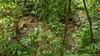 45. Palenque ruinas, Chiapas, Mexique-35.jpg (gaillard.galopere) Tags: 01000000 01002000 01022000 15000000 5d apn america amérique architecture artscultureetspectacles chiapas construction couleur culture histoire iptcsubjects mex mx maya mexico mexique mkiii outdoor palenque sport travel vegetations ville voyage arboles arbre arbres art artscultureandentertainment batiment canon civilisation color colorful coloré culturegeneral extérieur forest foret green monument outdoorphotography overland overlander roadtrip ruine tree trees verde vert wood