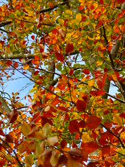 101_5642 (llocin) Tags: green yellow orange gold red autumn