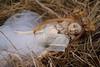 DSC024032 (jinka/yaminolady) Tags: bjd ball jointed doll heye he ye nyx ordoll lotus nature