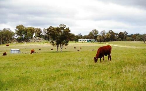 471 Watsons Creek Tilmunda Road,, Bendemeer NSW 2355