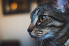 Penelope Pt. 2 (ivanrocha1) Tags: cat eyes nikond90 35mm18 filmlook nikon