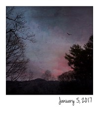 Sunrise, January 5, 2017 (jeanne.marie.) Tags: iphoneography iphone7plus instant elkmountain mountains trres silhouettes bird flying morning onepieceofsky january52017 sunrise 365the2017edition 3652017 5jan17 day5365