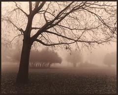 Misty morning 2.0 (Antonio's darkroom) Tags: pentax 67ii smc kodak trix pyrocathd ilford wt catechol moersch se1 sepia mt4 mt3 toning mist